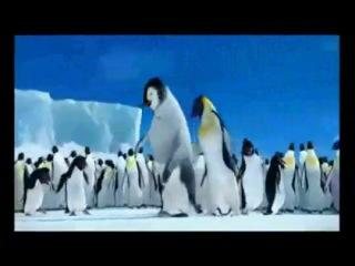 Happy Feet - Penguins Riverdance