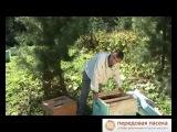 Пчеловодство. Десять советов начинающему пчеловоду и десять ошибок начинающего пчеловода